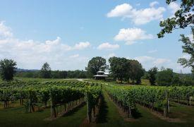 Nottely River Valley Vineyards | Activities in NC | Cabin Rentals of Georgia