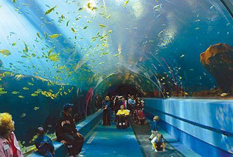 Georgia Aquarium Related Keywords & Suggestions - Georgia Aquarium ...