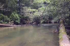 Hemlock Hideaway | Cabin Rentals of Georgia | Beautiful Creek
