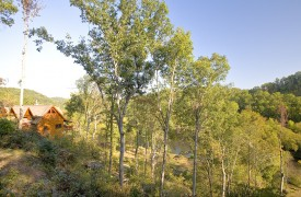 Fallen Timber Lodge | Cabin Rentals of Georgia | Surrounded By Nature