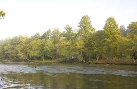 Fallen Timber Lodge | Cabin Rentals of Georgia | The Beautiful River